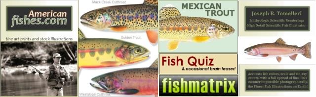 Joe Tomelleri - American Fishes
