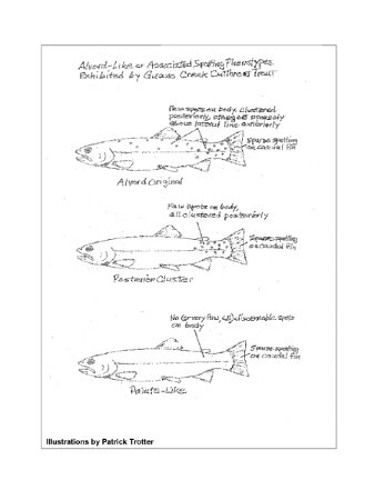 Phenotypical Oncorhynchus clarki alvordensis Illustrations by Patrick Trotter