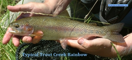 Typical Trout Creek Redband