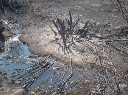 Fire Damage to Riparian Habitat