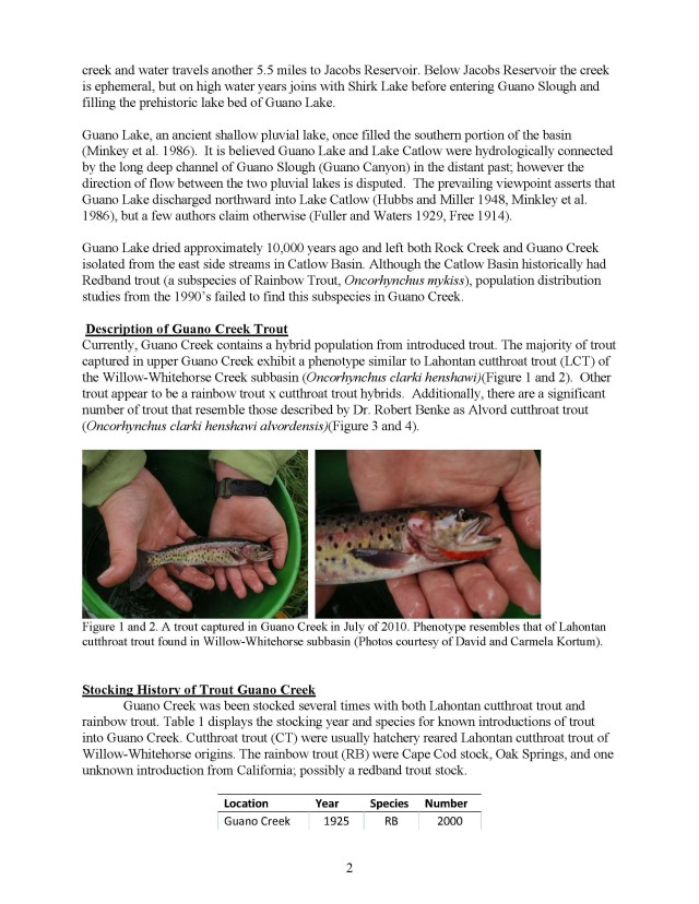 Preservation of Alvord cutthroat trout phenotype from Guano Creek (2)