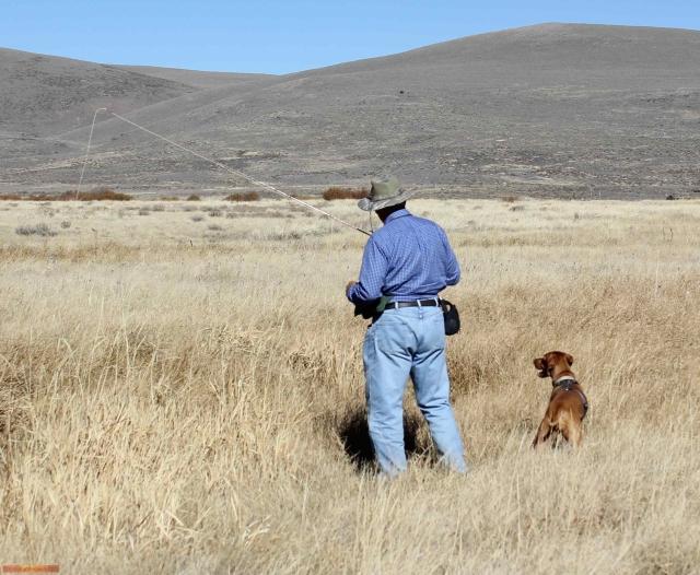 Dry Grassland Prarie