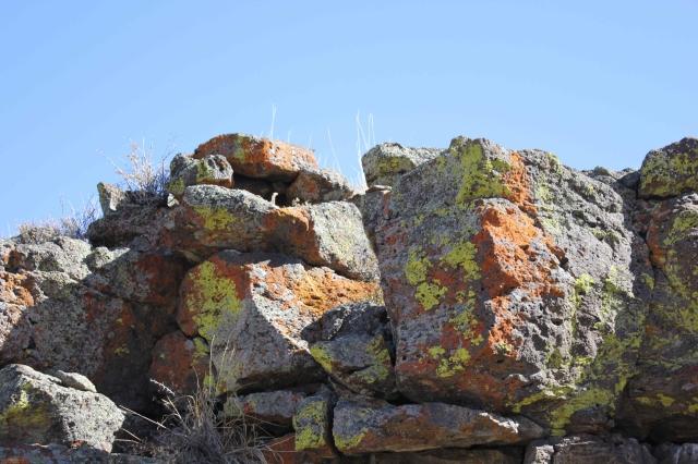 Dry Lichens on Rocks