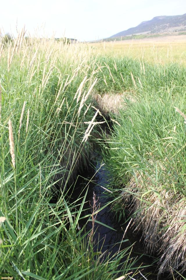 Creek2d